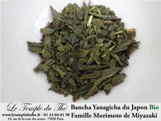 yanagicha-morimoto-2020